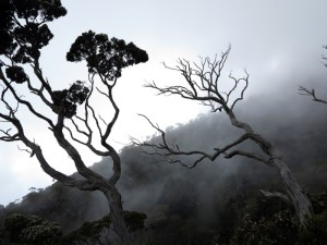 Cloud forest on Mount Kinabalu